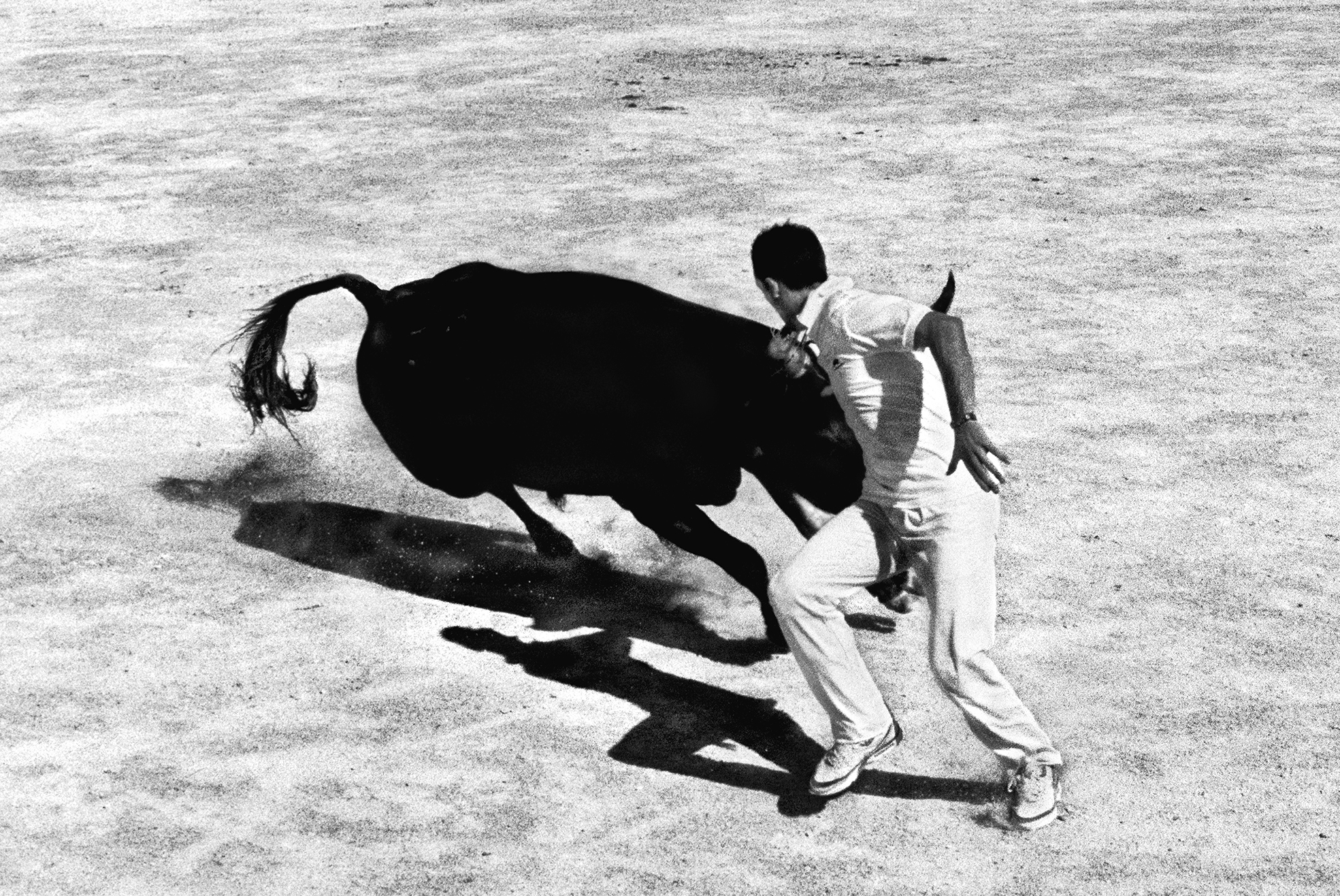 (Untitled, After Picasso) Course Camarguaise