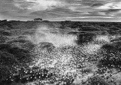 The Gathering, Tanzania 2016 Canson fine art print, Image size: 89,6×111,2cm